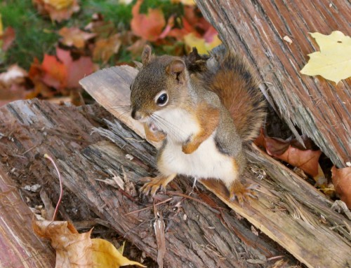 Die Eichhörnchen-Strategie